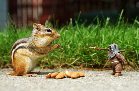 Chipmunk vs Ewok 