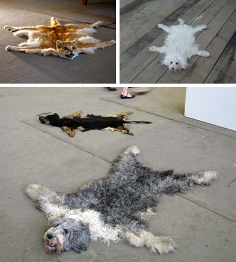 Dog Carpets