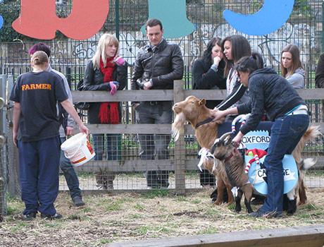 Start of goat race