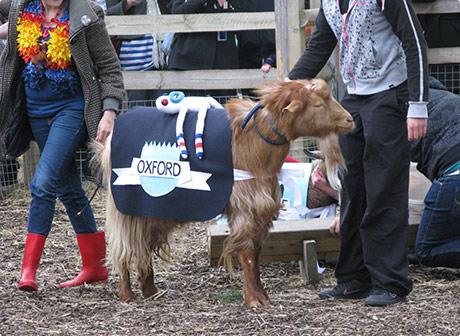 Oxford Goat