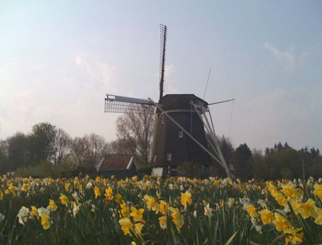 I'm in Holland