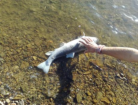 Big Dead Fish