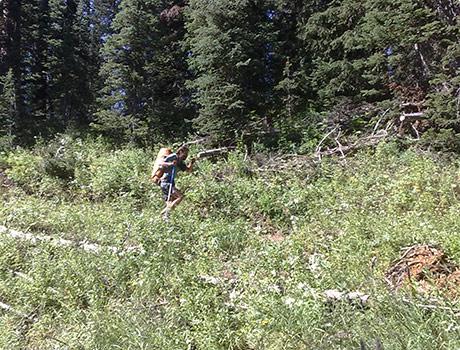 Running down Granite Canyon